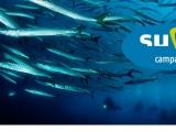 Punta Campanella Diving